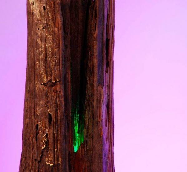 Licht / Woodpacker